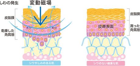 シワやしみのある肌と健康な肌との比較